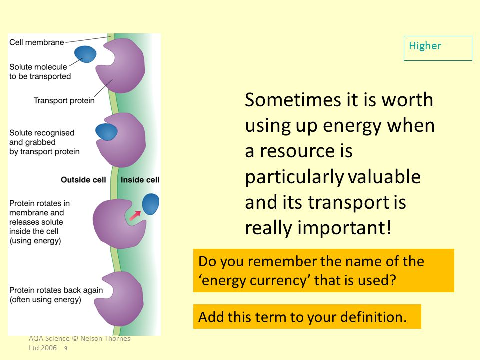 AQA Science © Nelson Thornes Ltd 2006 9 Sometimes it is worth using up energy when a resource is particularly valuable and its transport is really imp