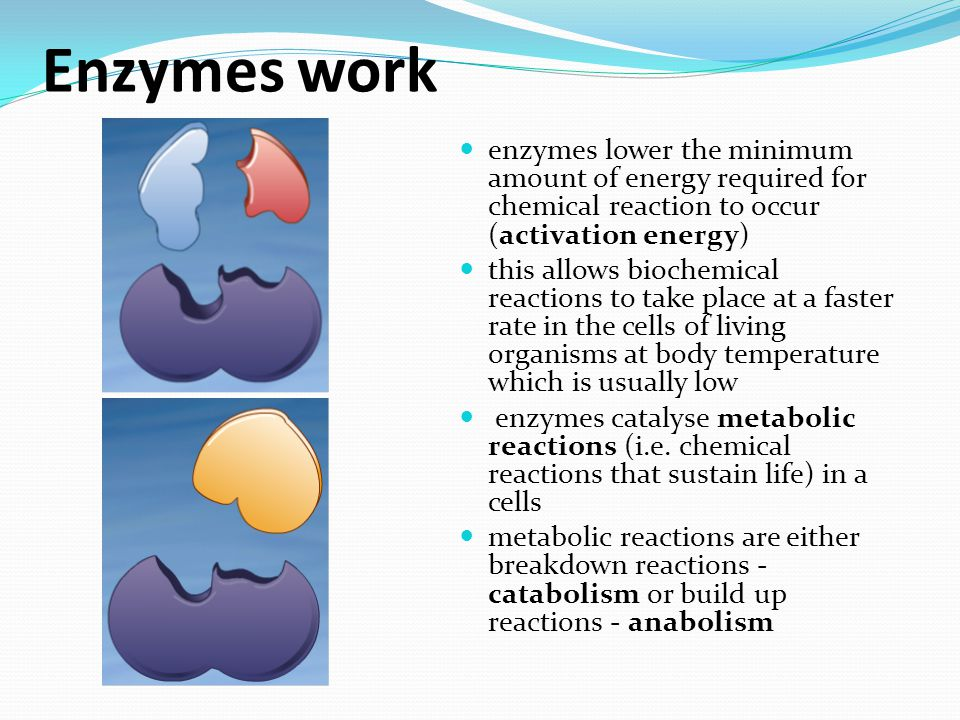 Naming of Enzymes Enzyme are named according to the reaction they catalyse A suffix – ase is usually added to the name of the substrate of the reaction catalysed by the enzyme Sometimes they are given special names such as catalase & amylase Catalase is the fastest acting enzyme