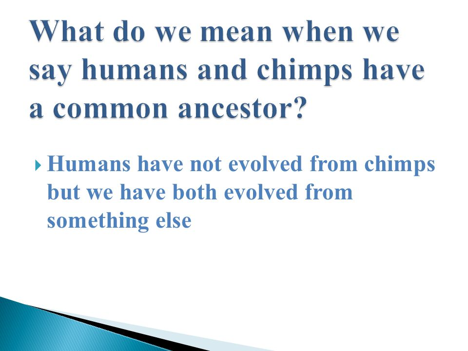  Humans have not evolved from chimps but we have both evolved from something else