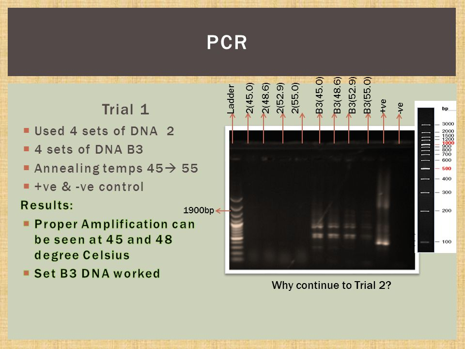 Trial 1 PCR Why continue to Trial 2.