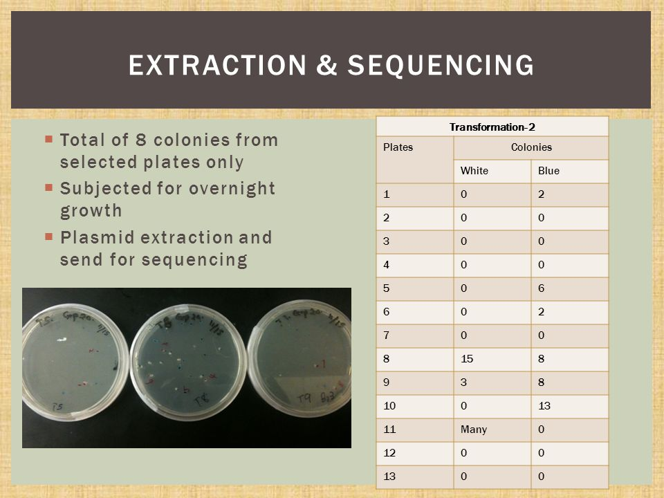  Total of 8 colonies from selected plates only  Subjected for overnight growth  Plasmid extraction and send for sequencing EXTRACTION & SEQUENCING Transformation- 2 PlatesColonies WhiteBlue 102 200 300 400 506 602 700 8158 938 10013 11Many0 1200 1300