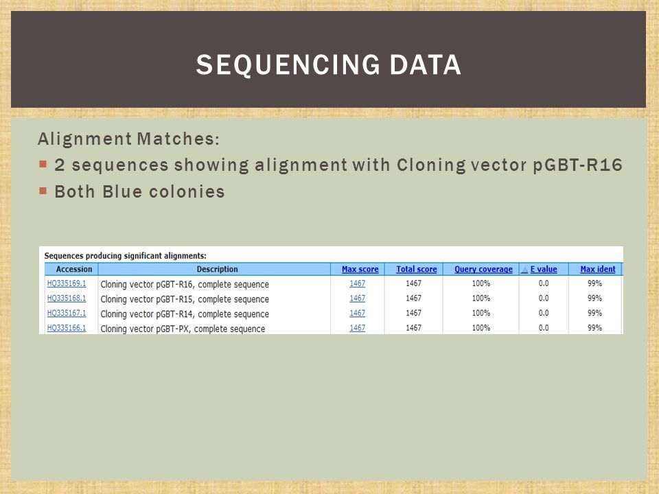 Alignment Matches:  2 sequences showing alignment with Cloning vector pGBT-R16  Both Blue colonies SEQUENCING DATA
