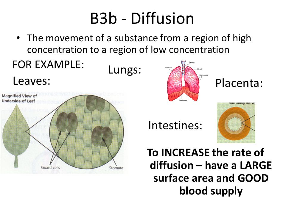 B3b - Diffusion The movement of a substance from a region of high concentration to a region of low concentration FOR EXAMPLE: Leaves: Lungs: Placenta: Intestines: To INCREASE the rate of diffusion – have a LARGE surface area and GOOD blood supply