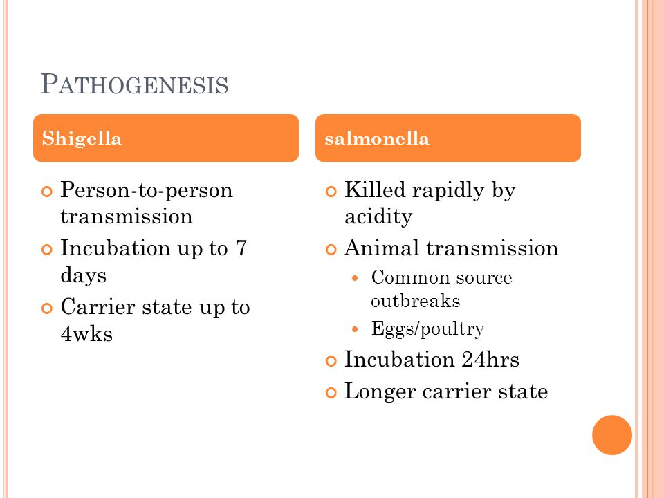 P ATHOGENESIS Shigella Person-to-person transmission Incubation up to 7 days Carrier state up to 4wks salmonella Killed rapidly by acidity Animal transmission Common source outbreaks Eggs/poultry Incubation 24hrs Longer carrier state