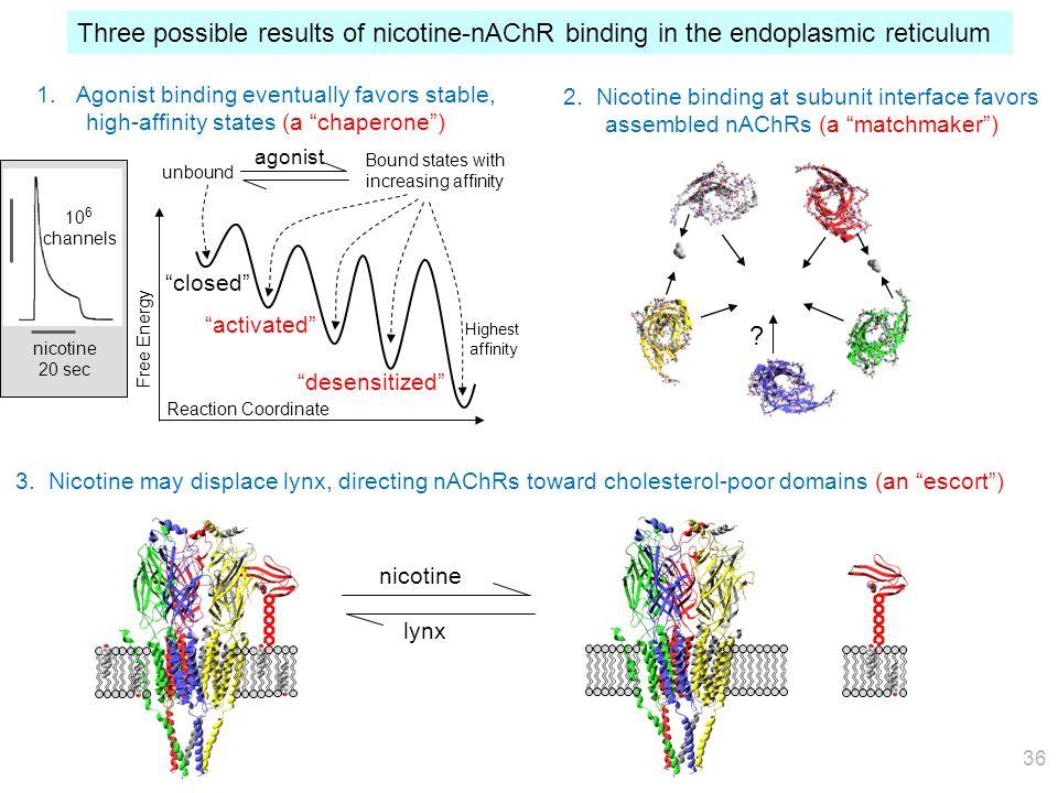 35 Nucleus UPRE Plasma nAChR Nicotine in CSF Classical Pathway: Channel activation & desensitization → Do neurons survive Despite stressors? Unfolded