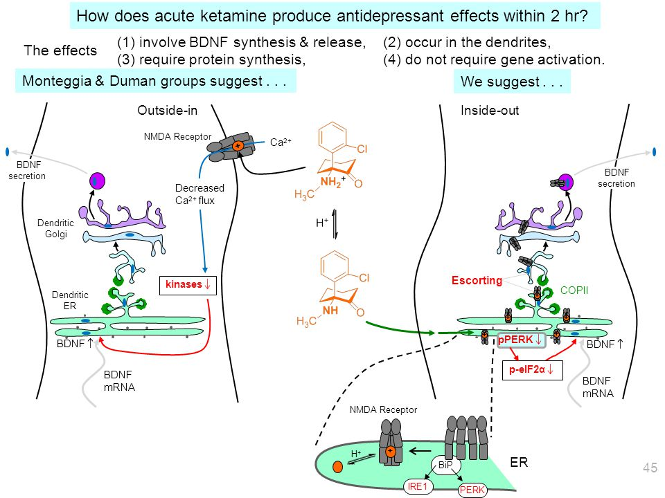 """Gene activation is too brief to account for the """"therapeutic lag"""" Axonal transport provides a natural delay in the """"inside-out"""" mechanism. Speed: ~ 1"""
