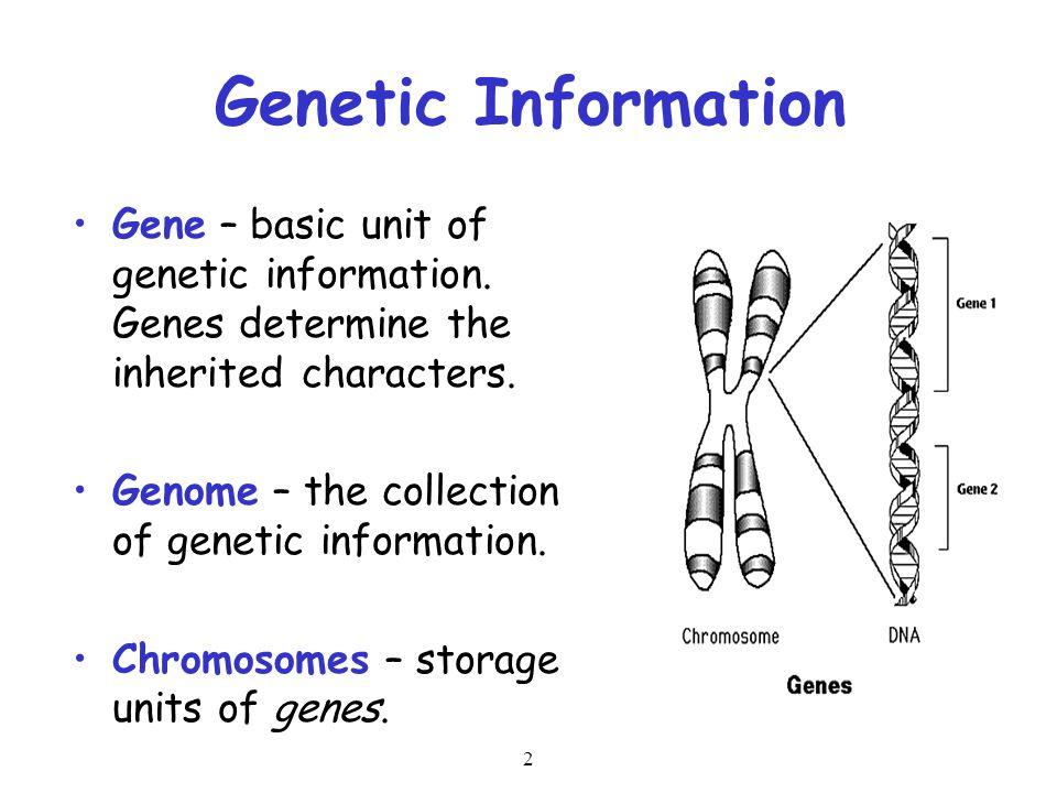 2 Genetic Information Gene – basic unit of genetic information. Genes determine the inherited characters. Genome – the collection of genetic informati