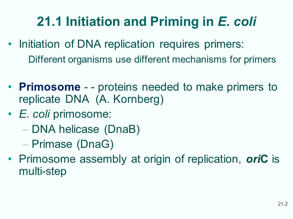 21-3 DnaA binds to unique oriC at sites called dnaA boxes; cooperates with RNAP, HU protein to melt nearby DNA region DnaB binds to open complex, facilitates binding of primase to complete primosome; DnaB helicase activity unwinds DNA Primosome remains with replisome, repeatedly primes Okazaki fragment synthesis on lagging strand E.