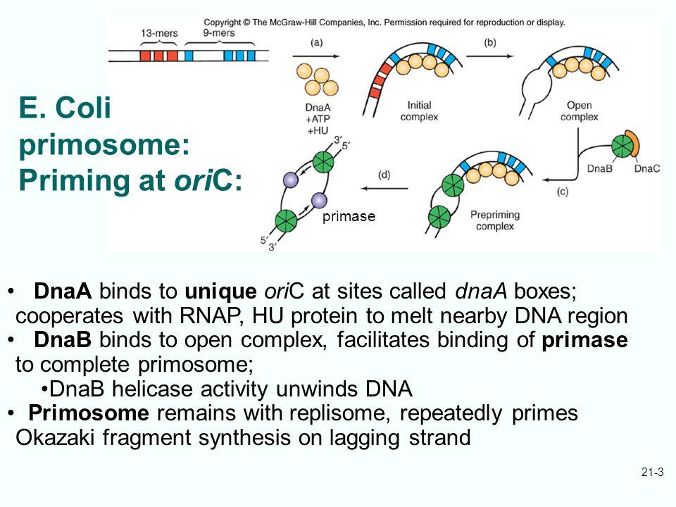 21-24 Telomere sequences vary: Tetrahymena: TTGGGG Vertebrates: TTAGGG Yeast: TTGGG Fig.