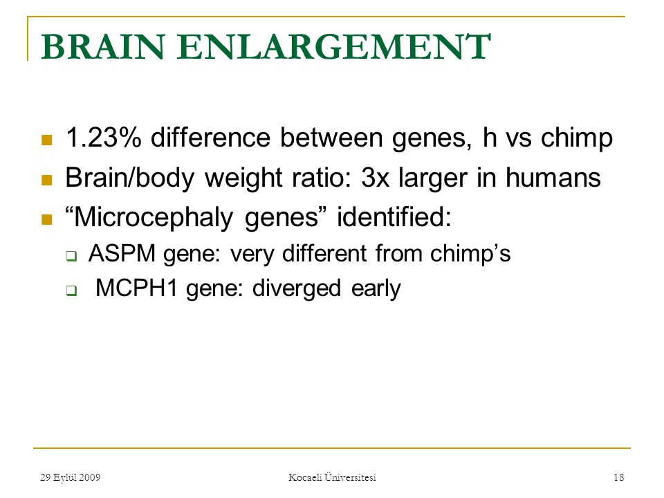 29 Eylül 2009 Kocaeli Üniversitesi 18 BRAIN ENLARGEMENT 1.23% difference between genes, h vs chimp Brain/body weight ratio: 3x larger in humans Microcephaly genes identified:  ASPM gene: very different from chimp's  MCPH1 gene: diverged early