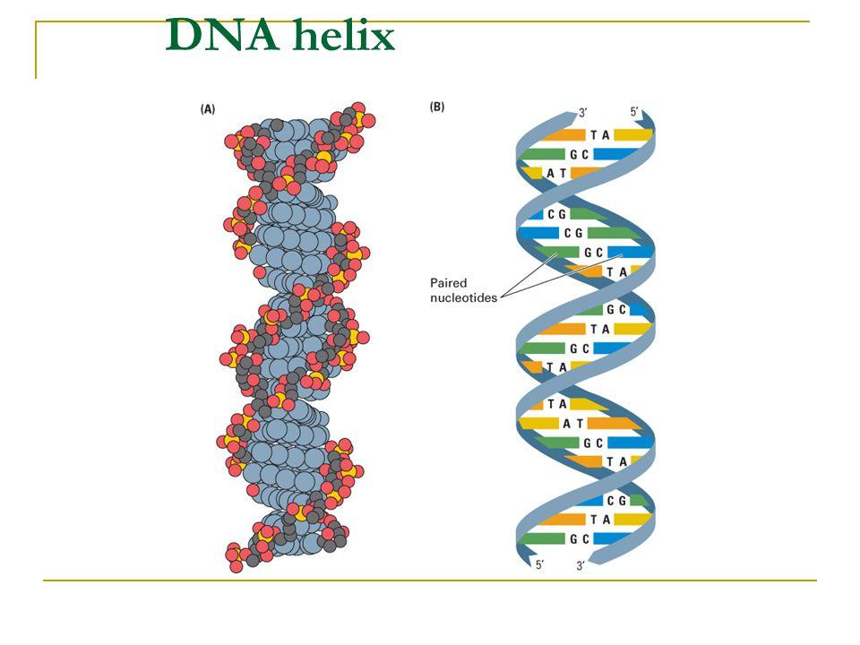 KAYNAKÇA Avrupa Birliği: Avrupa'da Genetik ve Kamu ve Profesyonel Politikalar http://europa.eu.int/comm/research/biosociety/pdf/bmh4_ct98_0550_partb.pdf Avrupa Konseyi – Genetik testin etik, yasal ve sosyal açılımları üzerine 25 Öneri ve diğer öneriler http://ec.europa.eu/research/science-society/http://ec.europa.eu/research/science-society/ ABD Ulusal Sağlık Enstitüleri Sağlık ve İnsan Servisleri Araştırma Risklerinden Koruma Ofisi http://ohrp.osophs.dhhs.gov/humansubjects/guidance/45cfr46.htm http://ohrp.osophs.dhhs.gov/humansubjects/guidance/45cfr46.htm Helsinki Bildirgesi, Dünya Tıp Birliği http://www.wma.net/e/policy/b3.htmhttp://www.wma.net/e/policy/b3.htm İngiltere Genetik Test için Danışma Komitesi ttp://www.doh.gov.uk/genetics/recrev3.htm ttp://www.doh.gov.uk/genetics/recrev3.htm Nürnberg İlkeleri http://ohsr.od.nih.gov/nuremberg.php3http://ohsr.od.nih.gov/nuremberg.php3 UNESCO uluslararası bildirgeler www.unesco.orgwww.unesco.org İnsan Hakları Taraftarı Tüm Avukat ve Hekimler http://www.glphr.orghttp://www.glphr.org ABD Başkanlık Biyoetik Kurulu http://www.bioethics.govhttp://www.bioethics.gov İngiltere İnsan Genetiği Komisyonu http://hgc.gov.ukhttp://hgc.gov.uk Genetik Araştırma ve Uygulamada Etik.