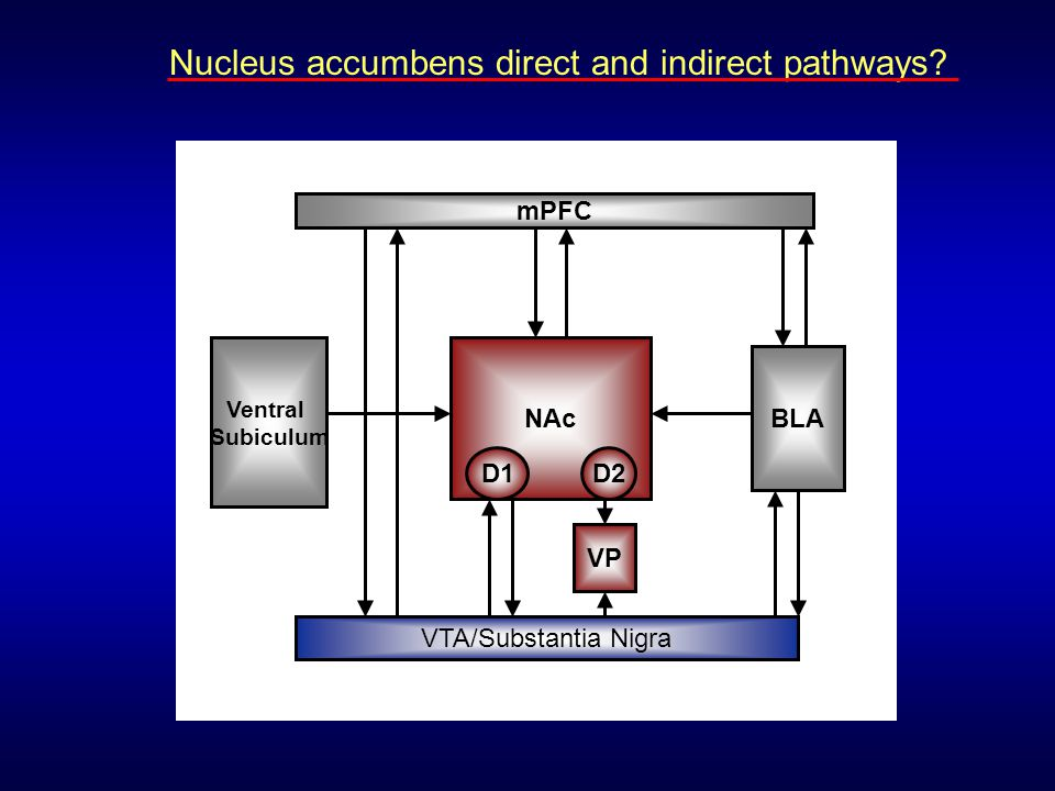 NAc VP VTA/Substantia Nigra mPFC BLA Ventral Subiculum D1D2 Nucleus accumbens direct and indirect pathways?