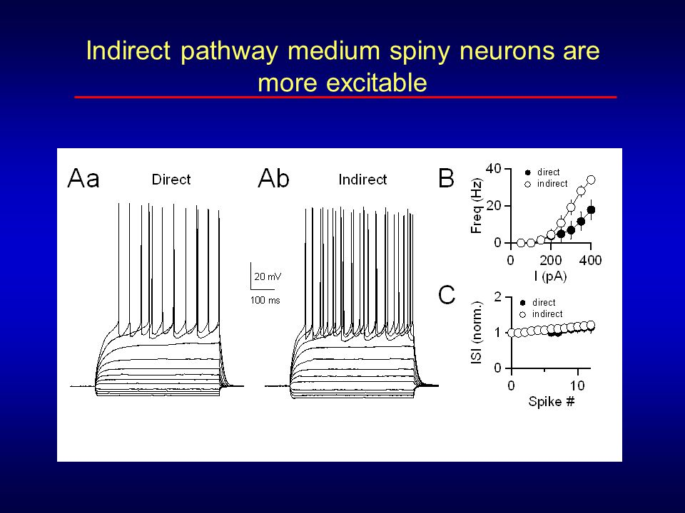 Indirect pathway medium spiny neurons are more excitable