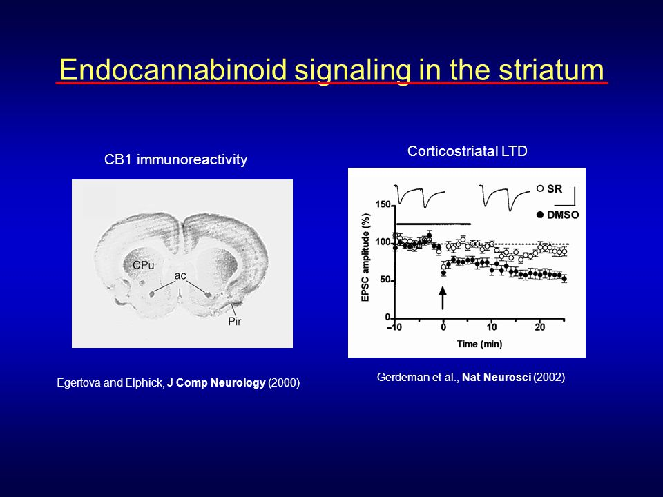 Endocannabinoid-mediated(?) LTD occurs only at indirect pathway synapses in nucleus accumbens