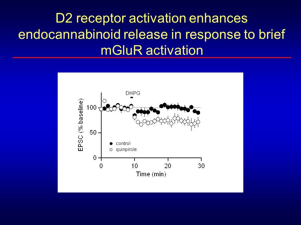 D2 receptor activation enhances endocannabinoid release in response to brief mGluR activation DHPG