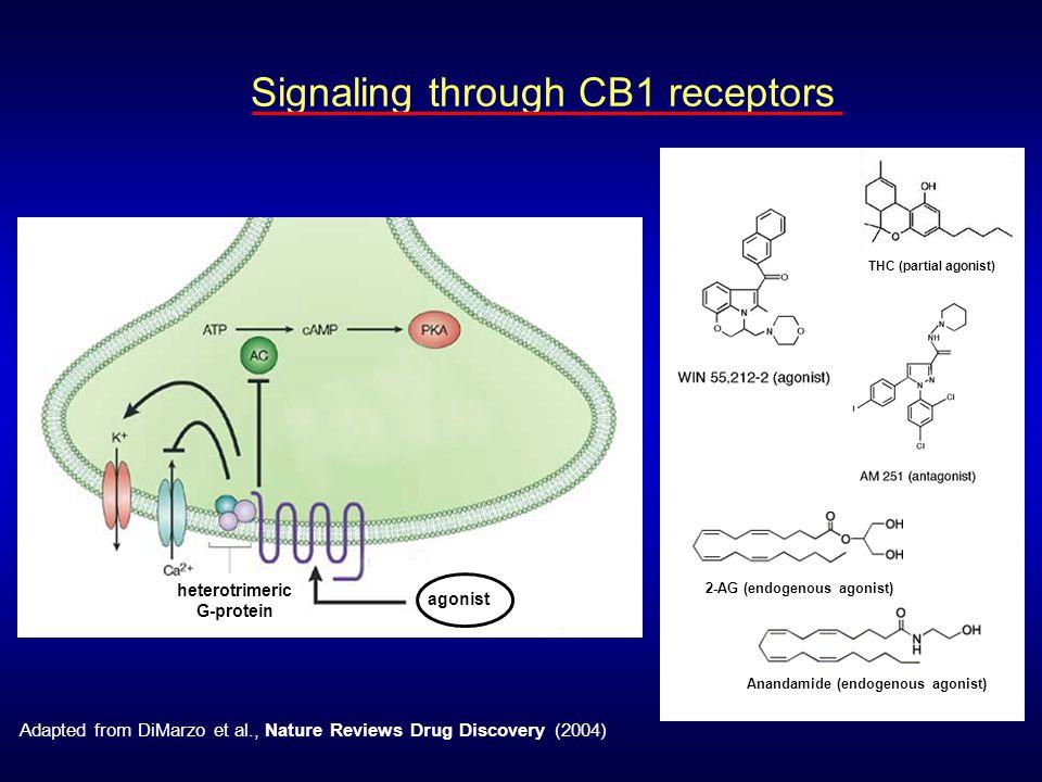 Signaling through CB1 receptors agonist heterotrimeric G-protein THC (partial agonist) 2-AG (endogenous agonist) Anandamide (endogenous agonist) Adapt