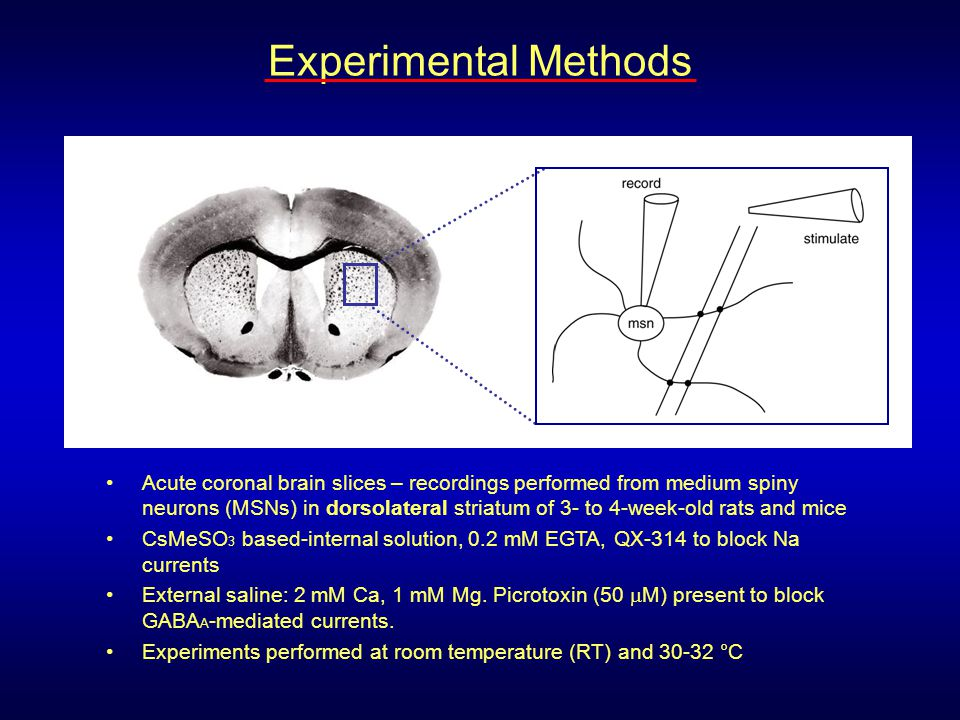 Caudate/ Putamen Motor Cortex Motor Thalamus Premotor Cortex + Glutamate - GABA GPe GPi/SNr STN Dopamine SNc + - X (L-DOPA) STN Pacemaker Pallidotomy eCB biosynthesis Basal ganglia motor circuit: Parkinson's disease treatments