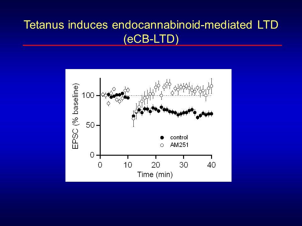 eCB-LTD requires mGluRs