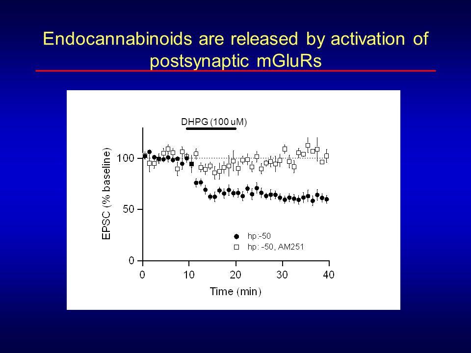 DHPG (100 uM) mGluR-mediated endocannabinoid release is enhanced by subthreshold depolarization Time (min) EPSC (% baseline)