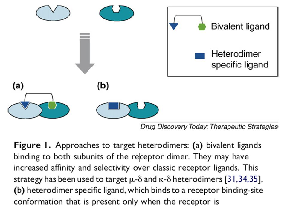 Heterodimerization leads to a change in the binding pocket that could be specifically targeted to develop heterodimer selective drugs