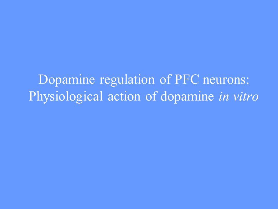 Dopamine regulation of PFC neurons: Physiological action of dopamine in vitro
