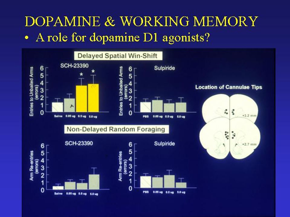 Summary of the Physiological Effects of Dopamine