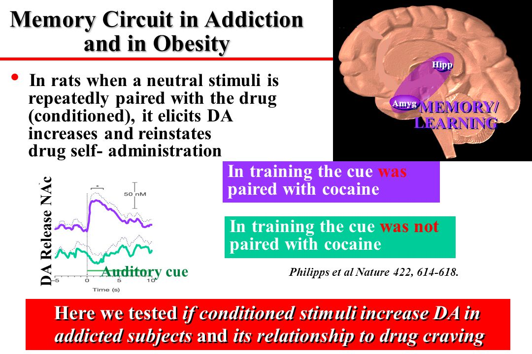 Hipp Amyg MEMORY/ LEARNING MEMORY/ LEARNING Philipps et al Nature 422, 614-618. In training the cue was paired with cocaine In training the cue was no