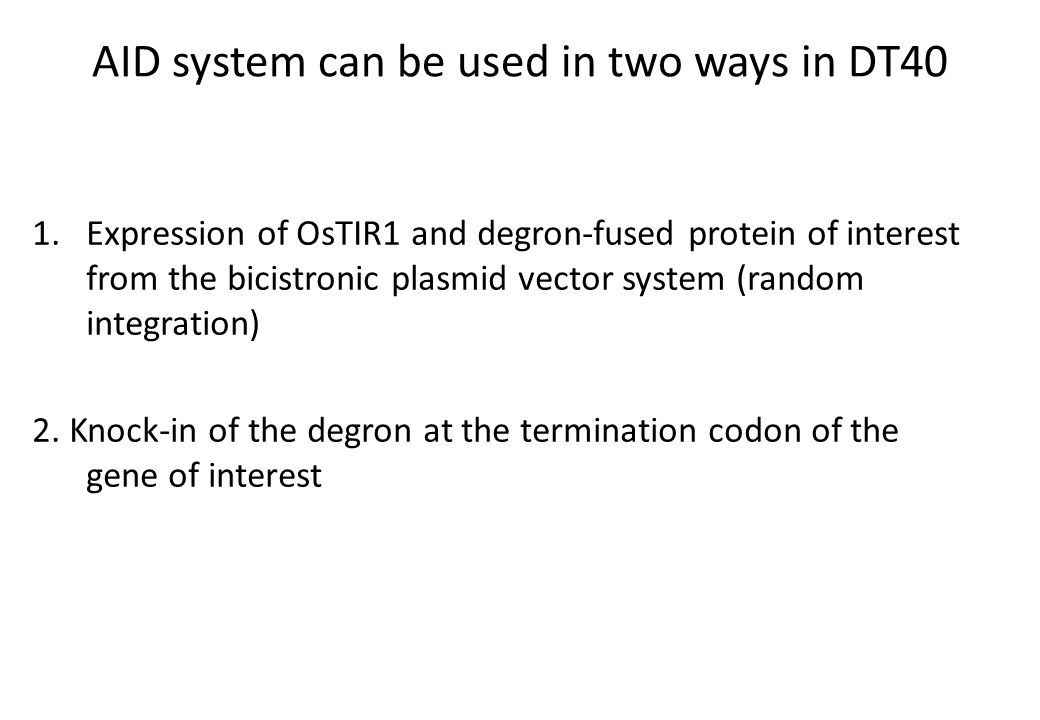 AID system can be used in two ways in DT40 1.Expression of OsTIR1 and degron-fused protein of interest from the bicistronic plasmid vector system (random integration) 2.