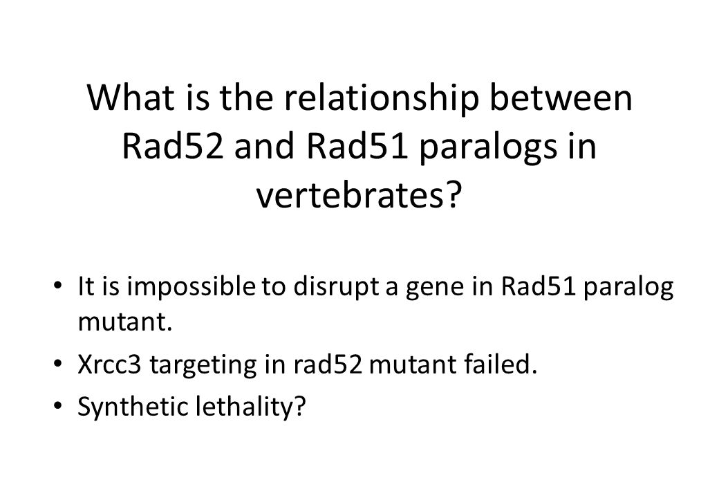 What is the relationship between Rad52 and Rad51 paralogs in vertebrates.
