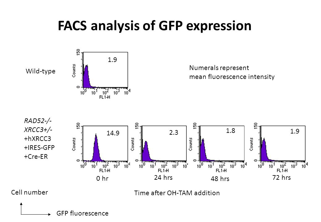 1.9 14.9 2.3 1.8 1.9 0 hr 24 hrs 48 hrs 72 hrs Wild-type RAD52-/- XRCC3+/- +hXRCC3 +IRES-GFP +Cre-ER Time after OH-TAM addition GFP fluorescence Cell number Numerals represent mean fluorescence intensity FACS analysis of GFP expression