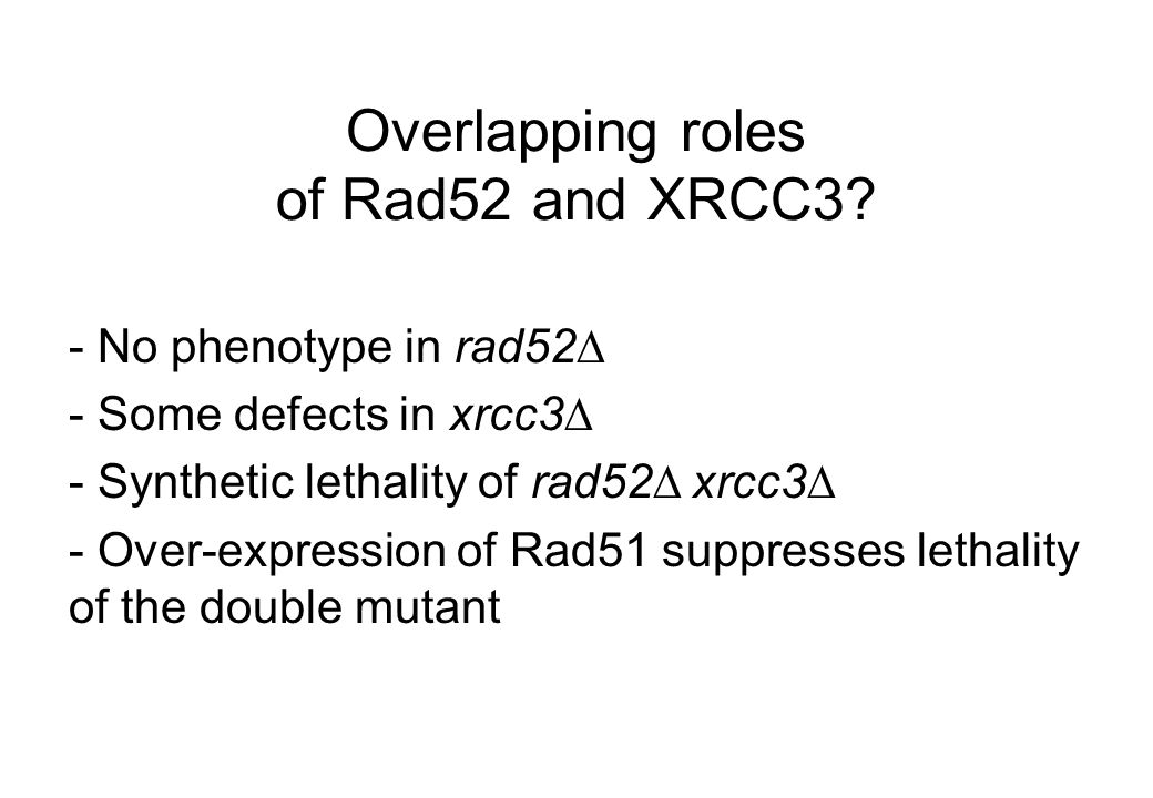 Overlapping roles of Rad52 and XRCC3.