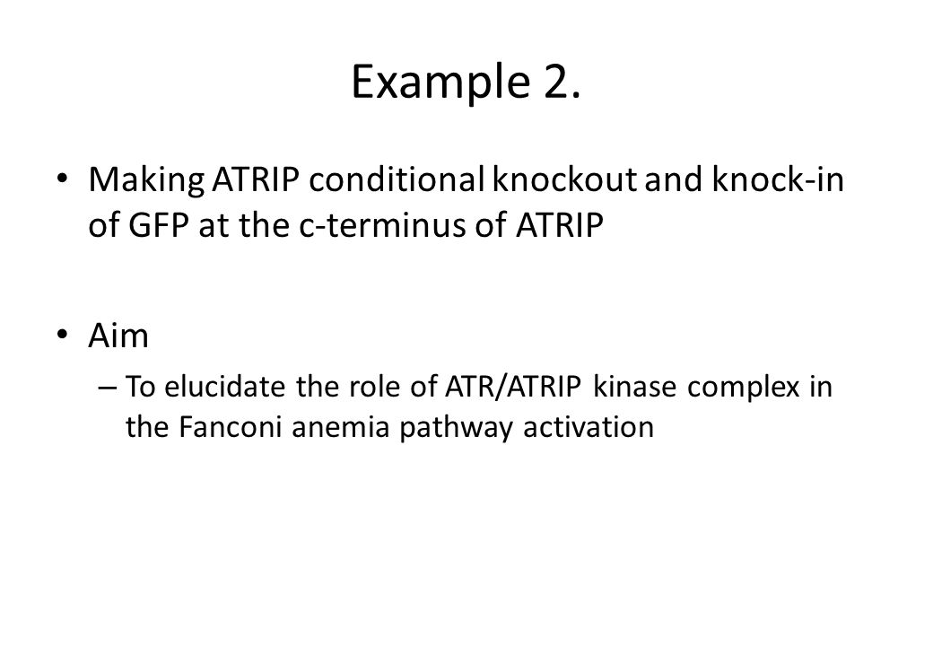 Example 2. Making ATRIP conditional knockout and knock-in of GFP at the c-terminus of ATRIP Aim – To elucidate the role of ATR/ATRIP kinase complex in