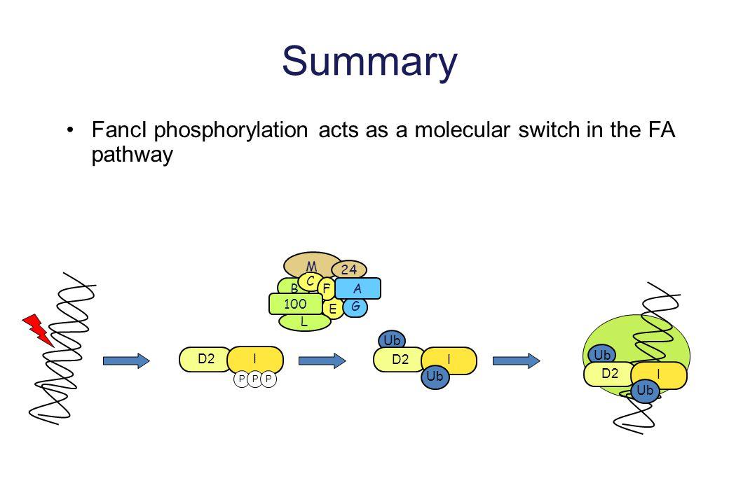 Summary FancI phosphorylation acts as a molecular switch in the FA pathway Ub D2 I Ub D2 I Ub D2 I Ub PPP M B 24 C E F G L A 100