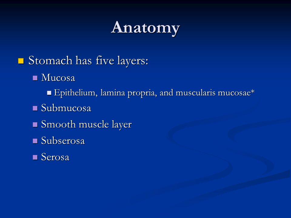 Anatomy Stomach has five layers: Stomach has five layers: Mucosa Mucosa Epithelium, lamina propria, and muscularis mucosae* Epithelium, lamina propria, and muscularis mucosae* Submucosa Submucosa Smooth muscle layer Smooth muscle layer Subserosa Subserosa Serosa Serosa