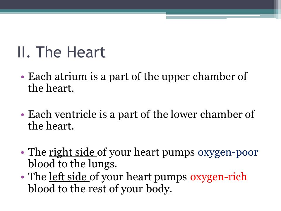 II. The Heart Each atrium is a part of the upper chamber of the heart. Each ventricle is a part of the lower chamber of the heart. The right side of y