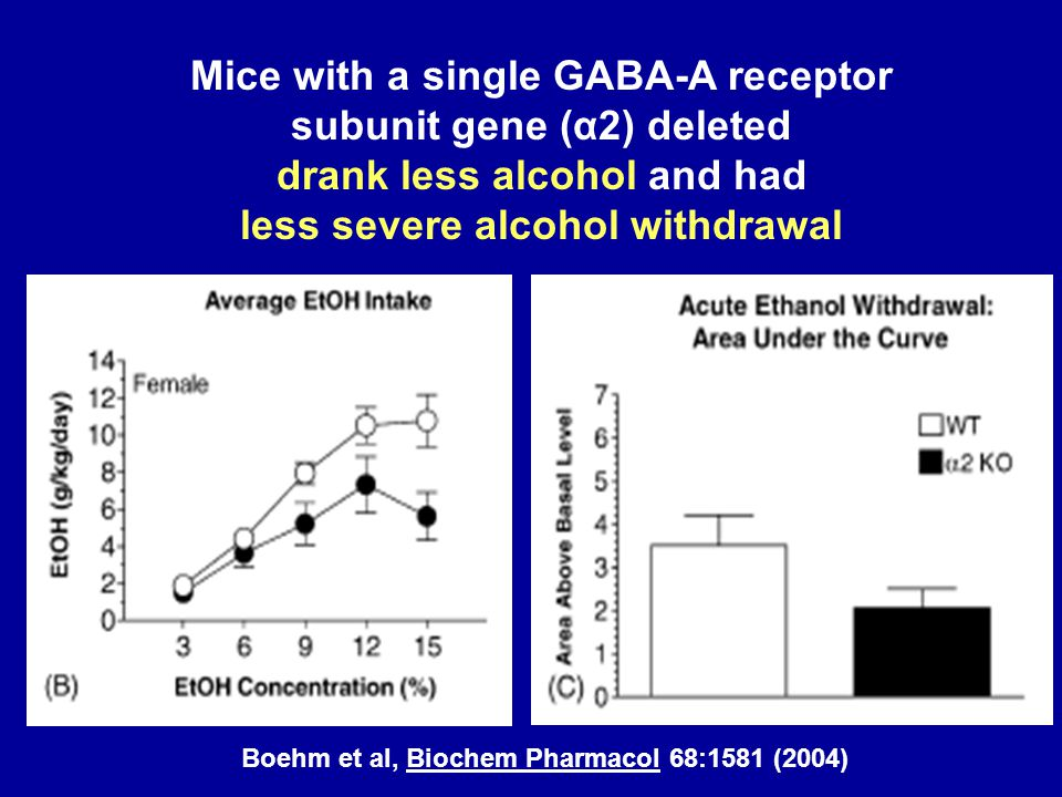 Boehm et al, Biochem Pharmacol 68:1581 (2004) Mice with a single GABA-A receptor subunit gene (α2) deleted drank less alcohol and had less severe alco