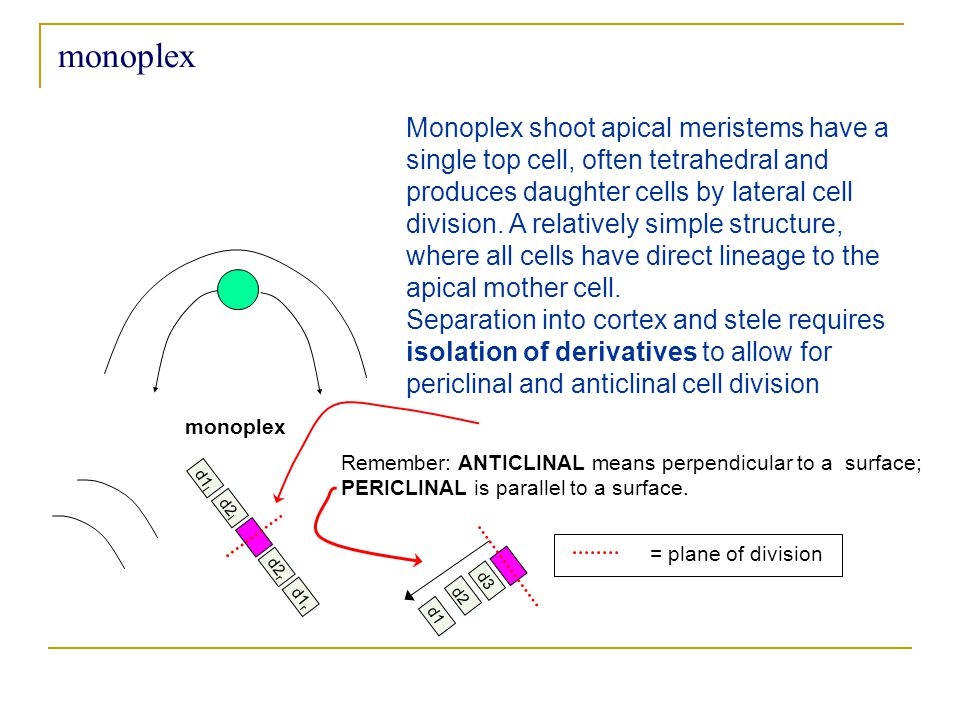 monoplex Monoplex shoot apical meristems have a single top cell, often tetrahedral and produces daughter cells by lateral cell division.