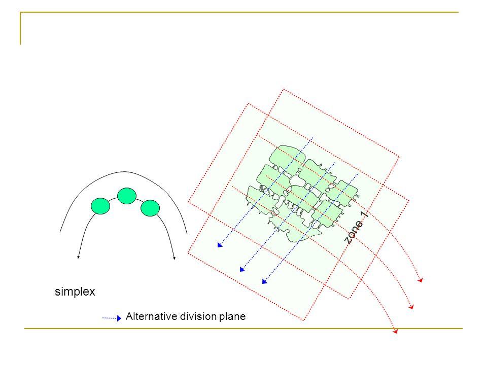 simplex zone 1 Alternative division plane