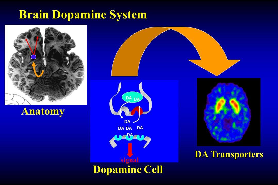 Anatomy DA signal Dopamine Cell DA Transporters Brain Dopamine System