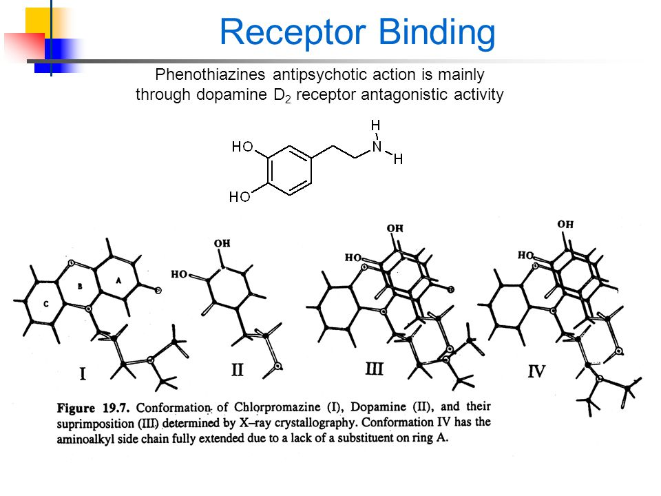 Receptor Binding Phenothiazines antipsychotic action is mainly through dopamine D 2 receptor antagonistic activity