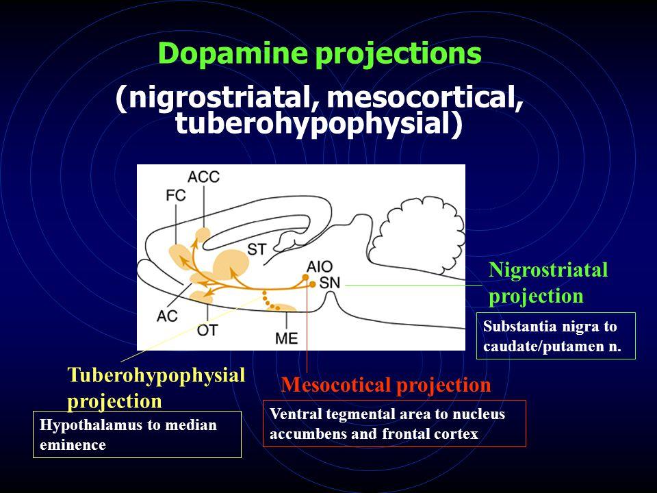 Dopamine projections (nigrostriatal, mesocortical, tuberohypophysial) Nigrostriatal projection Mesocotical projection Tuberohypophysial projection Substantia nigra to caudate/putamen n.