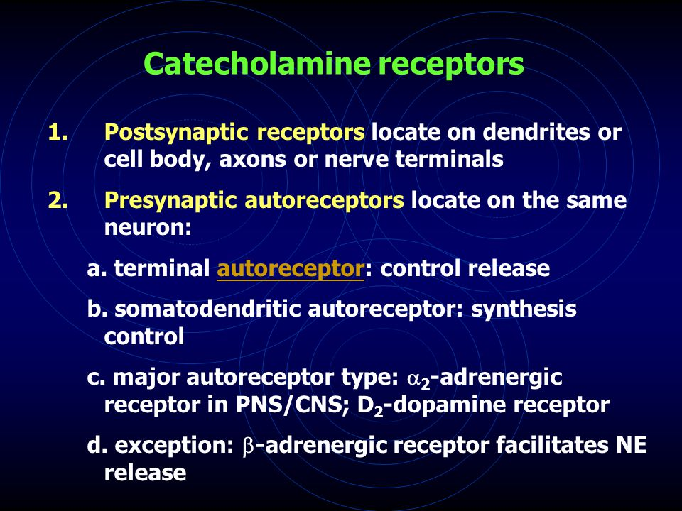 Catecholamine receptors 1.Postsynaptic receptors locate on dendrites or cell body, axons or nerve terminals 2.Presynaptic autoreceptors locate on the same neuron: a.