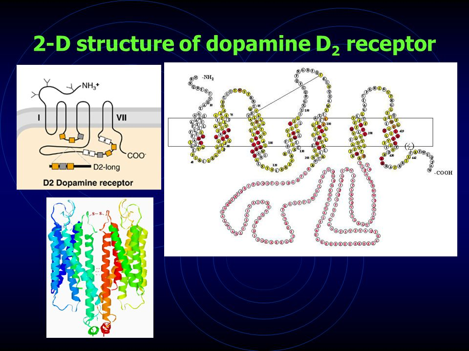 2-D structure of dopamine D 2 receptor