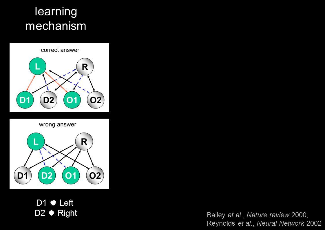 learning mechanism D1 ® Left D2 ® Right Bailey et al., Nature review 2000, Reynolds et al., Neural Network 2002