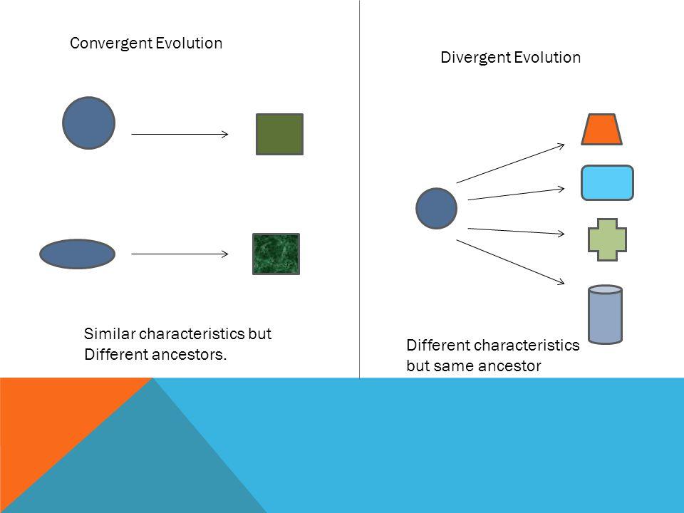 Convergent Evolution Similar characteristics but Different ancestors.
