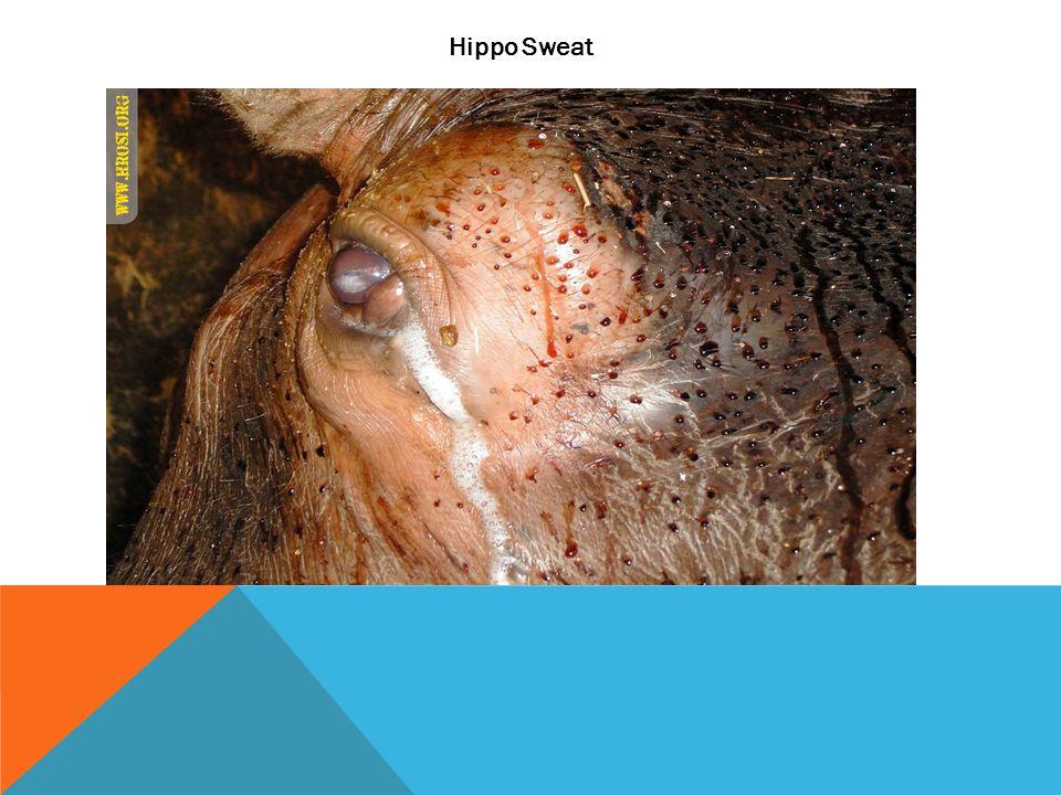 Hippo Sweat