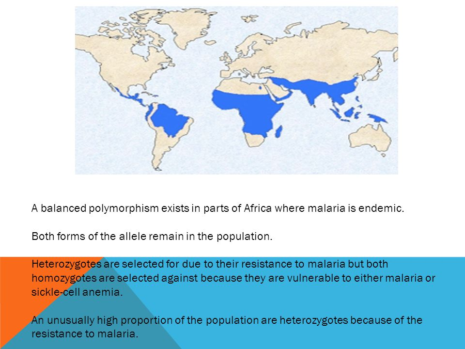 A balanced polymorphism exists in parts of Africa where malaria is endemic. Both forms of the allele remain in the population. Heterozygotes are selec