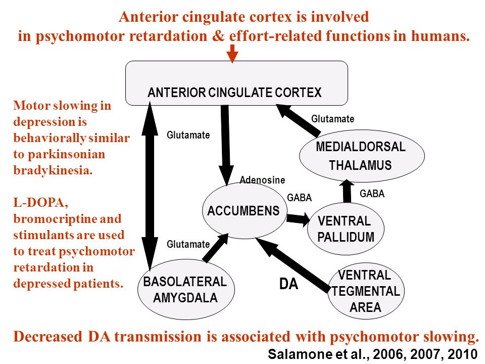 Glutamate ANTERIOR CINGULATE CORTEX MEDIALDORSAL THALAMUS VENTRAL PALLIDUM VENTRAL TEGMENTAL AREA ACCUMBENS DA Glutamate GABA BASOLATERAL AMYGDALA Glutamate Decreased DA transmission is associated with psychomotor slowing.
