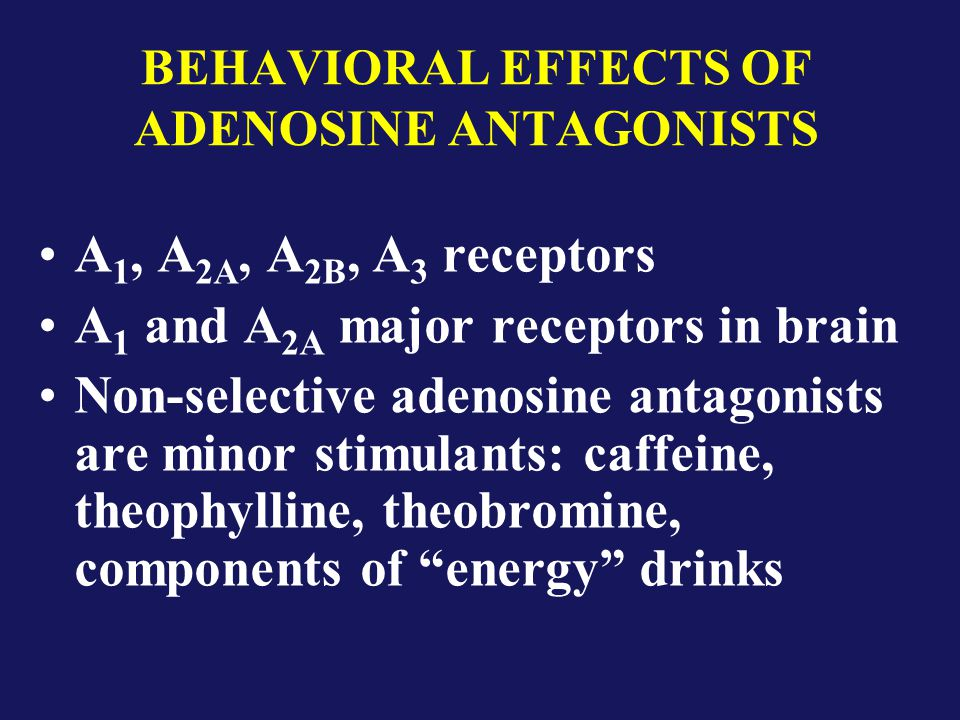 BEHAVIORAL EFFECTS OF ADENOSINE ANTAGONISTS A 1, A 2A, A 2B, A 3 receptors A 1 and A 2A major receptors in brain Non-selective adenosine antagonists are minor stimulants: caffeine, theophylline, theobromine, components of energy drinks