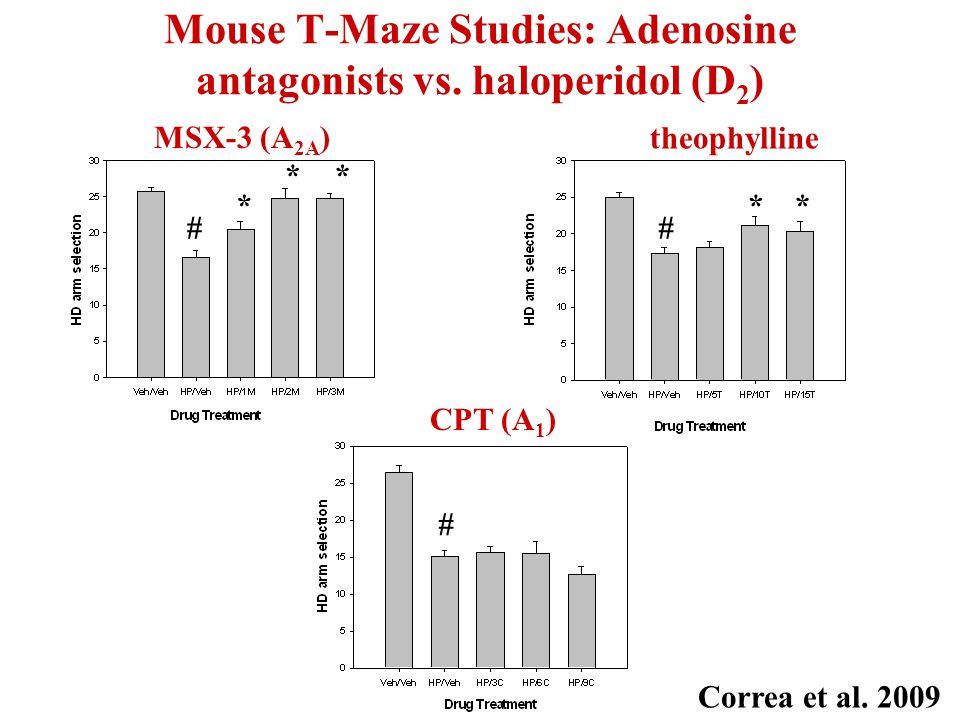 Mouse T-Maze Studies: Adenosine antagonists vs.